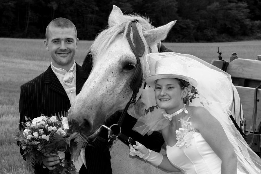 cheval avec les mariés